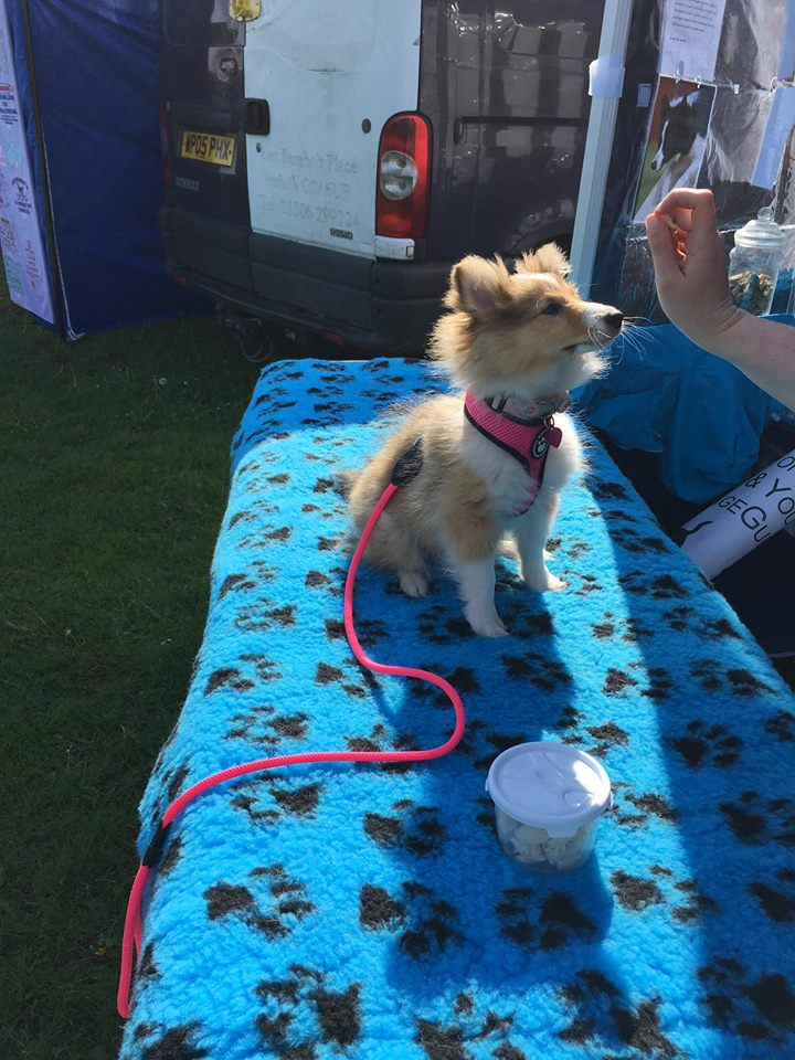 UKA Canine Massage 20 May 2